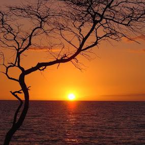 by Anu Sehgal - Landscapes Sunsets & Sunrises (  )
