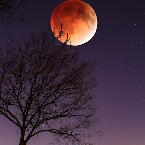 Total Lunar Eclipse - Red Moon by MIGUEL CORREA - Landscapes Starscapes ( carol stream il., startrail, moon, redmoon, stars, moon eclipse, star, lake, total eclipse,  )
