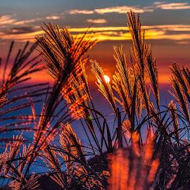 sunset by Gary Lu - Landscapes Sunsets & Sunrises ( sunset )