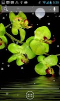 Screenshot of Orchids in Night