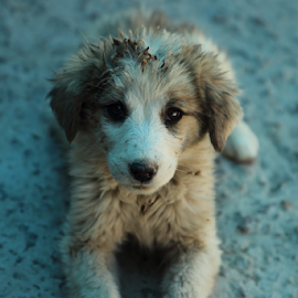 by SENTHILKUMAR KALIAPPAN - Animals - Dogs Puppies