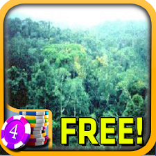 3D Rain Forest Slots - Free