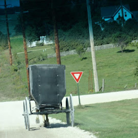 back of same buggy...notice there is no orange triangle.  They are against those, as well.  Color is not well accepted, except for red. by Lisa Bergstrom - Novices Only Street & Candid