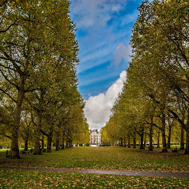 Green Park by Dobrinovphotography Dobrinov - City,  Street & Park  City Parks ( plant, copy space, famous place, europe, bench, street, tranquil scene, leaf, landscape, tree trunk, environmental conservation, spring, multi colored, photography, england, macro, color image, nature, no people, vibrant color, green park, bark, bush, light, uk, park, non-urban scene, green, british culture, forest, woods, london - england, season, outdoors, summer, branch, rural scene, lush foliage, day )