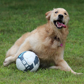 Someone must have been watching the World Cup..... by Neil Storey - Animals - Dogs Playing