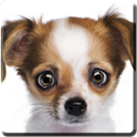 Eye-Puppy Live Wallpaper icon