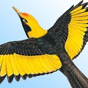 Morcombe's Birds of Australia icon