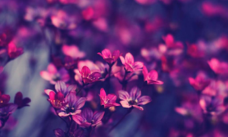 Screenshot of Violet Flowers Wallpapers