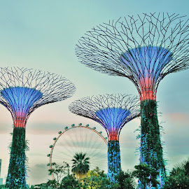Garden by the Bay by Koh Chip Whye - City,  Street & Park  City Parks ( garden )