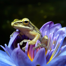 handsome little tree frog by Hendrata Yoga Surya - Instagram & Mobile Android