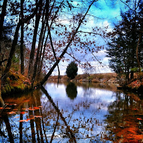 Duck pond by Berry Fraley - Instagram & Mobile Android