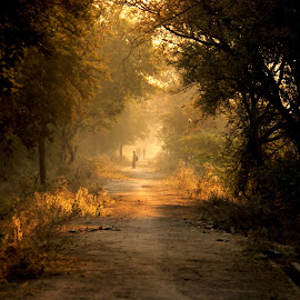 Sunlit Trail by Rohit Nagar - Landscapes Forests ( trail, forest, sunlight, colours )