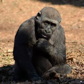 The Thinker by Suzanne Strittmatter - Animals Other Mammals