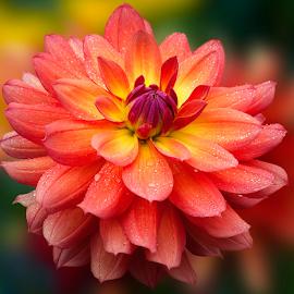 Fresh by Carl Sieswono Purwanto - Flowers Single Flower