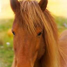 by Sverre Sebjørnsen - Animals Horses