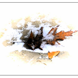 It's Icy ! by Linda Blevins - News & Events Weather & Storms ( slick, ice, snow, leaves, pretty,  )