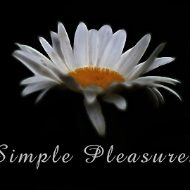 Simple Pleasures by Dipali S - Typography Quotes & Sentences ( life, simple, illustration, white, daisy, pleasure, typography, captioned, photo )