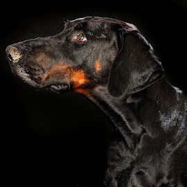Dog by John Phielix - Animals - Dogs Portraits ( old, pet, dog, mammal, portrait, animal,  )