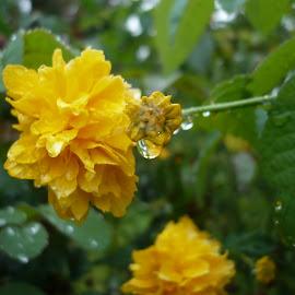 Macro raindrops by Drago Ilisinovic - Novices Only Macro