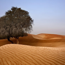 This Friday with Gopala Krishnan and Faizan Rashid by Anwar Khan - Landscapes Deserts ( sand, dunes, desert, tree, pattern, texures )