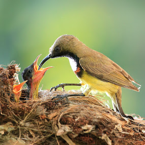 by Prachit Punyapor - Animals Birds ( love, babies, share, new born, family, feeding, birds )