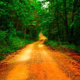 by Joel Eade - Transportation Roads ( peaceful, awesome, dirt road, beautiful, forest, road, dirt, pretty, country )