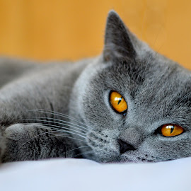 by Irma Kirschner - Animals - Cats Portraits