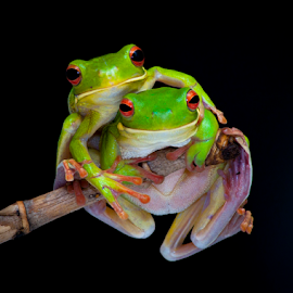 HUG by Robert Cinega - Animals Amphibians ( potrait, hug, frog, animal, #GARYFONGPETS, #SHOWUSYOURPETS )