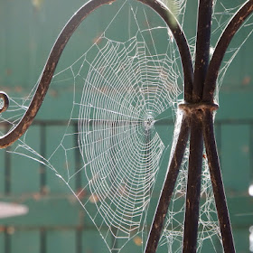 spiderweb-01.jpg