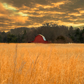 Lewisburg by Erin Nicholl - Landscapes Prairies, Meadows & Fields