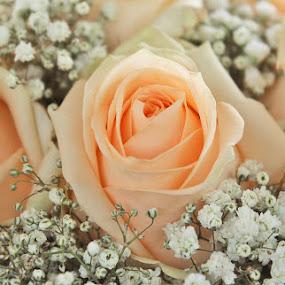 by Irena Klemenčič - Flowers Flower Arangements