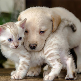 My best friend by Rob Ebersole - Animals - Dogs Puppies ( labrador retriever, puppy, lab )