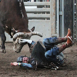by Gene Hyder - Sports & Fitness Rodeo/Bull Riding