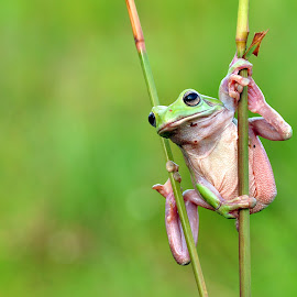 by Afan Mild - Animals Amphibians (  )