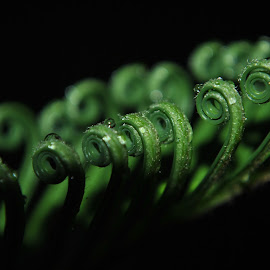Green Curls by Sergio Yorick - Nature Up Close Leaves & Grasses ( nature, green, nature up close, leaves, close up, black )