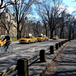 Along Central Park by Ferdinand Ludo - City,  Street & Park  Neighborhoods ( bicycles, condos, etc., new york, central park, taxis )