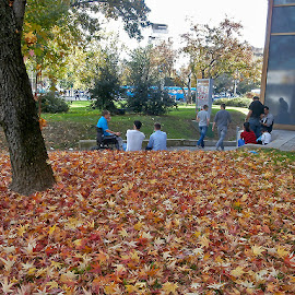 Pivo,najljepše se pije na tepihu od prvog jesenjeg lišća. by Katica Pecigoš-Kljuković - City,  Street & Park  City Parks ( zagreb, fall, color, colorful, nature )