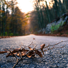 on the road.. by Kristijan Keran - Landscapes Forests ( countryside, hills, nature, forest, road, natural )