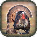 Free Turkey Hunting Calls APK for Windows 8