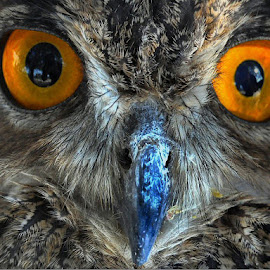 Eyes in Eyes by Borislav Seifert - Animals Birds