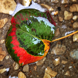 Swirleaf by Christa Miller - Instagram & Mobile iPhone ( red, autumn, green, fall, ground, leaf, rain, color, colorful, nature )