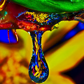 by David Winchester - Nature Up Close Natural Waterdrops