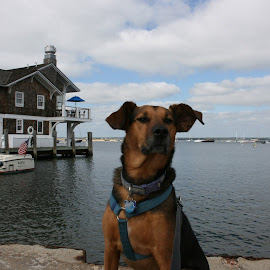 Ready to Sail by Tara Tarvin - Animals - Dogs Playing ( water, pose, connecticut, dog )