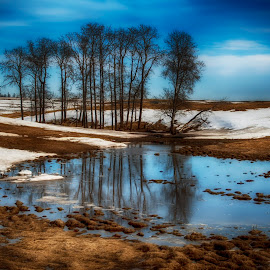 Winter Thaw by Gordon Price - Landscapes Prairies, Meadows & Fields ( field, water, snow, trees, landscape )