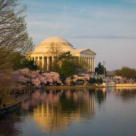 Jefferson Memorial by Michael Sharp - Buildings & Architecture Statues & Monuments ( dc, jefferson memorial, washington dc, united states, cherry blossoms )