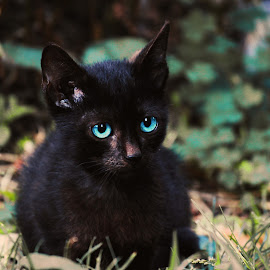 Black curiosity by Văduva Alexandru - Animals - Cats Kittens ( kitten, nature, little, cute, black )
