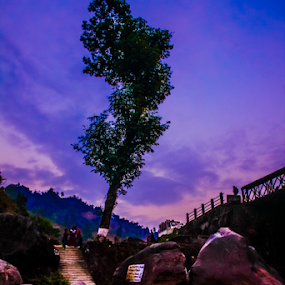 Night Tree. by Soumyaroop  Chatterjee  - Landscapes Prairies, Meadows & Fields ( colour, dooars, nature, landscape, canon 550d,  )