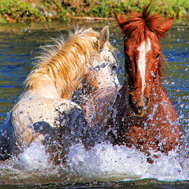 Do You Wanna Dance!! by Fred Herring - Animals Horses