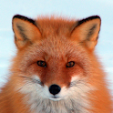 Fox HD LWP Full icon