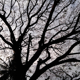 by Beekay Kurandwad - Nature Up Close Trees & Bushes